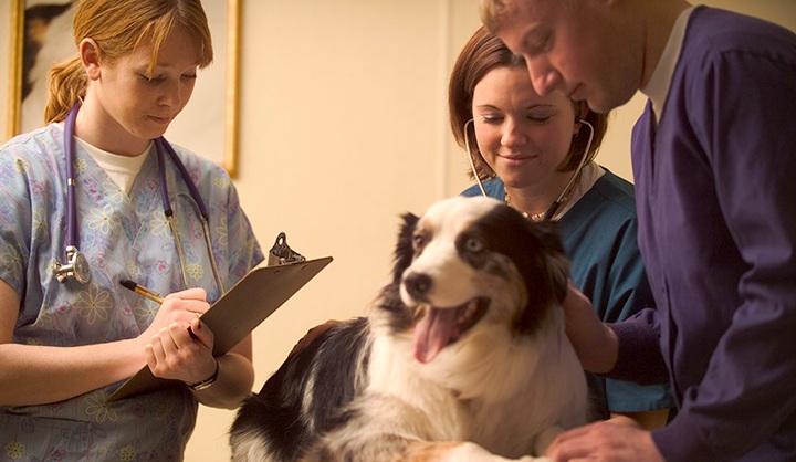 Vet Tech Helping a Patient